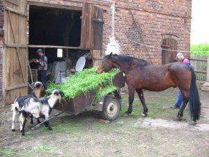 Świeża dostawa trawy.
