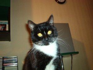Czarno biała kotka.