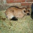 Tuptusia wkrótce po narodzinach