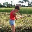 grabienie siana w wały